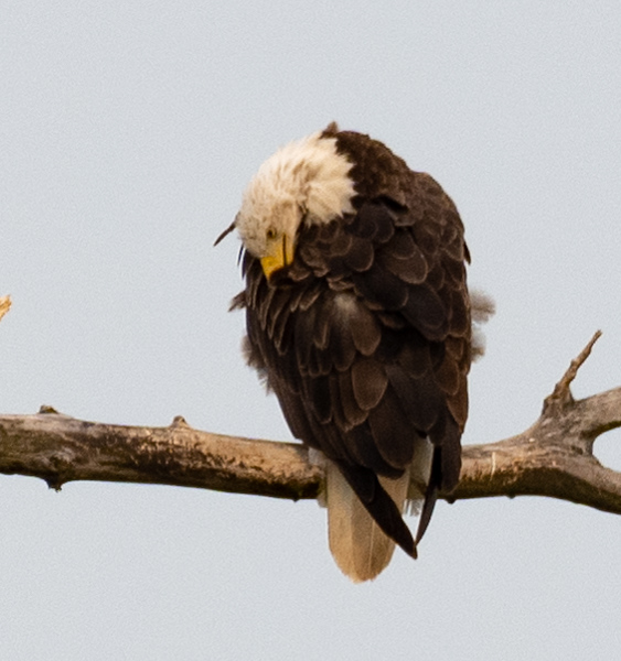 08-07-2020-eagles-7.jpg