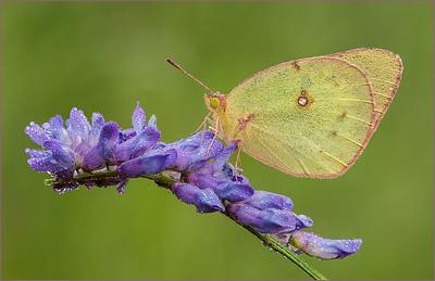 Beautiful close-up nature