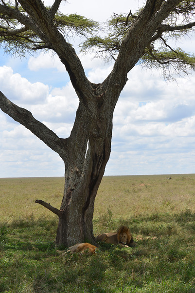 East Africa Safari 333.jpg