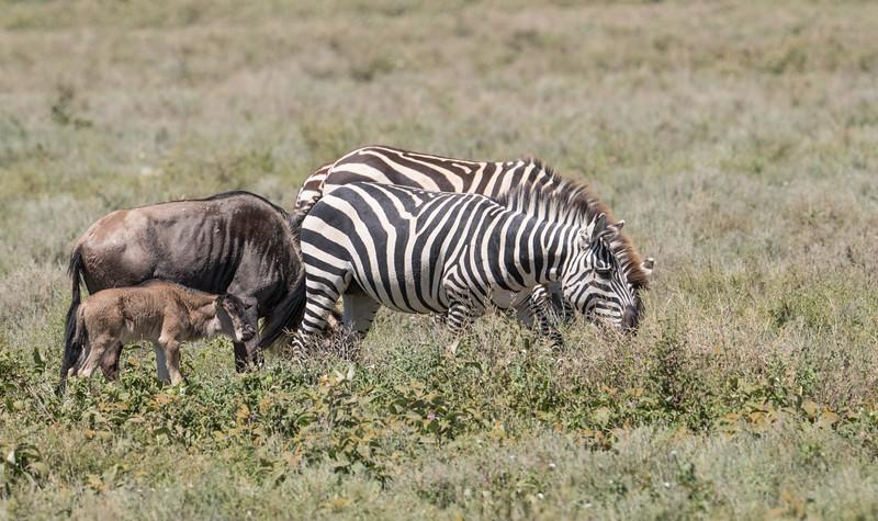 Tanzania_Feb_2018-421.jpg