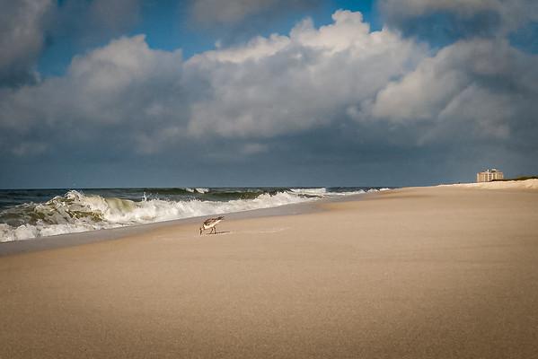 Sandpiper on Johnson Beach