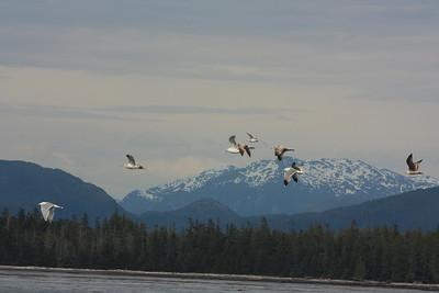 Alaska and Kuzmateen