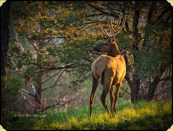 Elk & Hummers