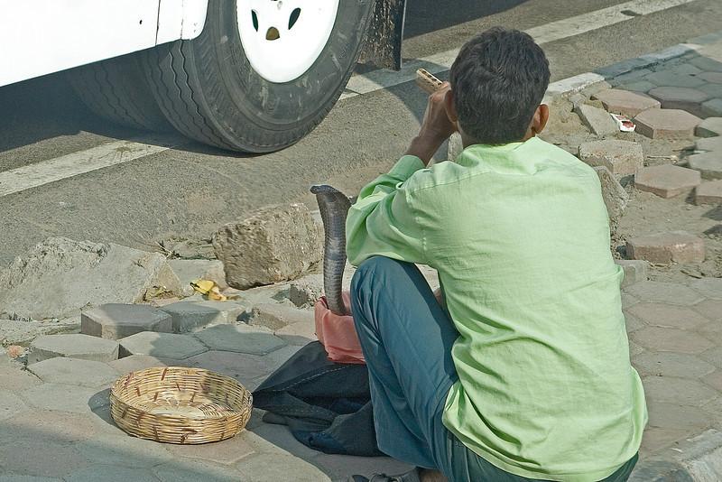 Snake Charmer beside the Road.jpg