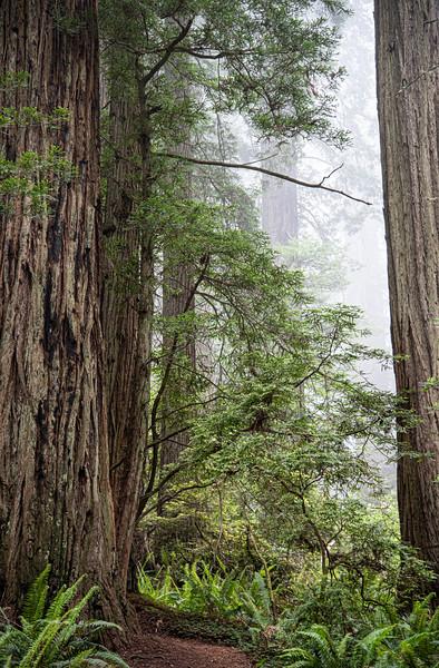 redwoodsFin29-1237.jpg