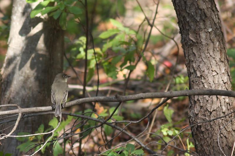 Caleb Smith State Park, Smithtown, NY.