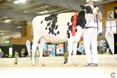 Holstein Junior Show