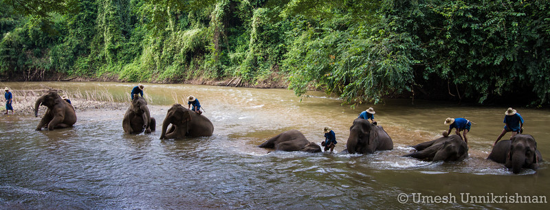 Thailand - Chiang Dao elephant training center 3398.jpg