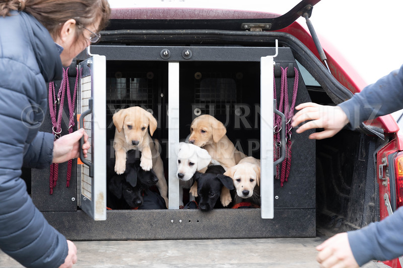 Weika Puppies 24 March 2019-8747.jpg
