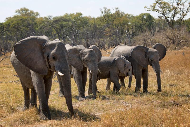 2014-08Aug-Okavango Masters-67-Edit.jpg
