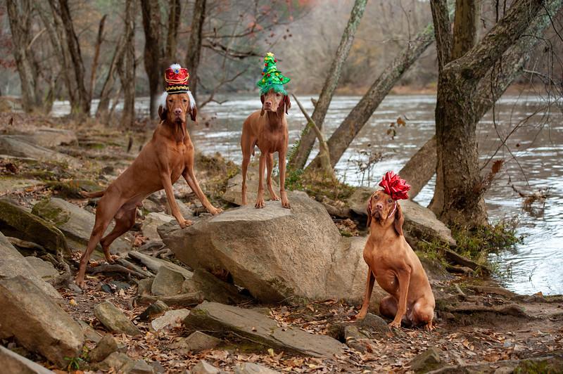 3 Dogs Rock-2.jpg