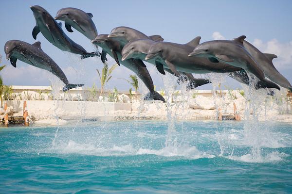Dolphinaris Cozumel 11.jpg