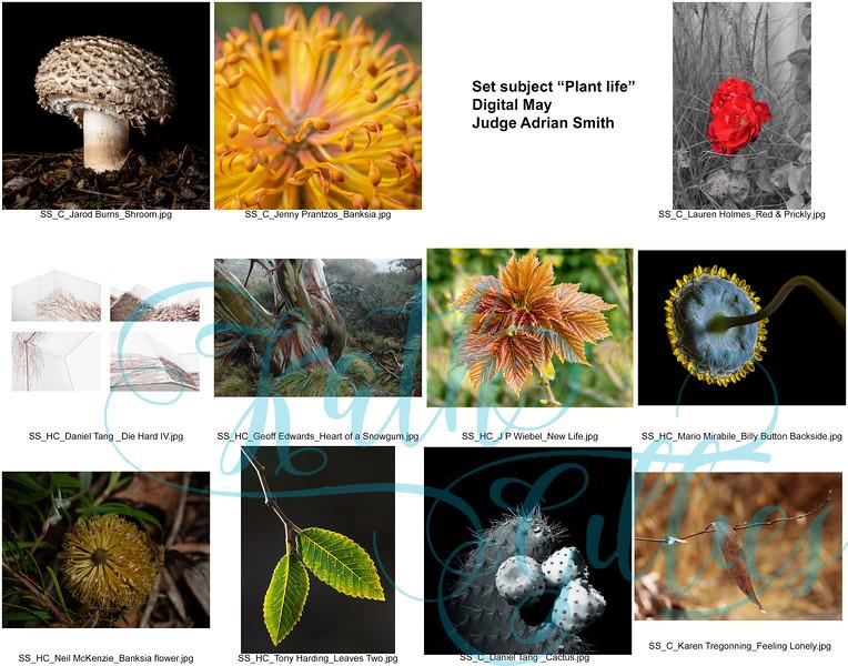 5 may digital plant life 2 copy.jpg