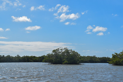 1230PM Heart of Rookery Bay Kayak Tour - Venderly