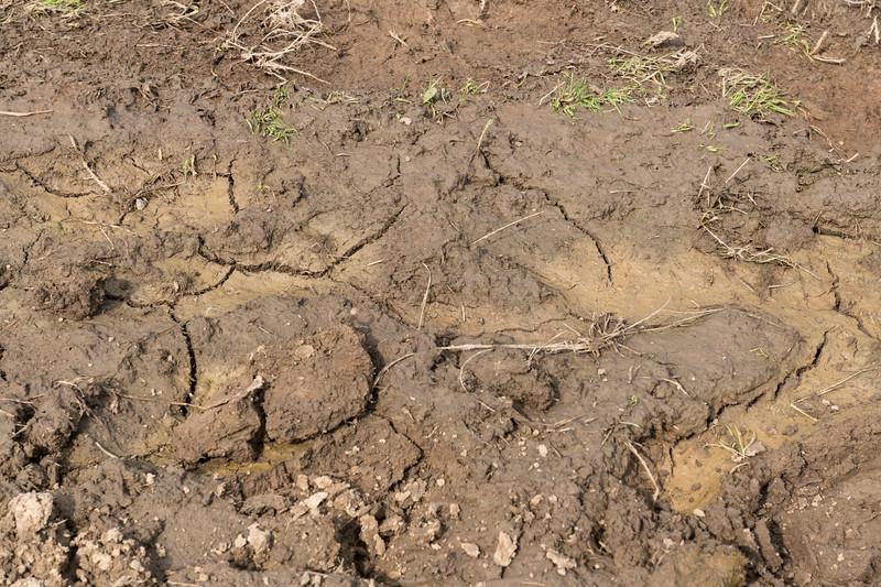 Mud on field