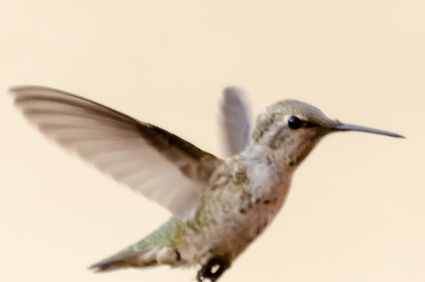Hummers_070613