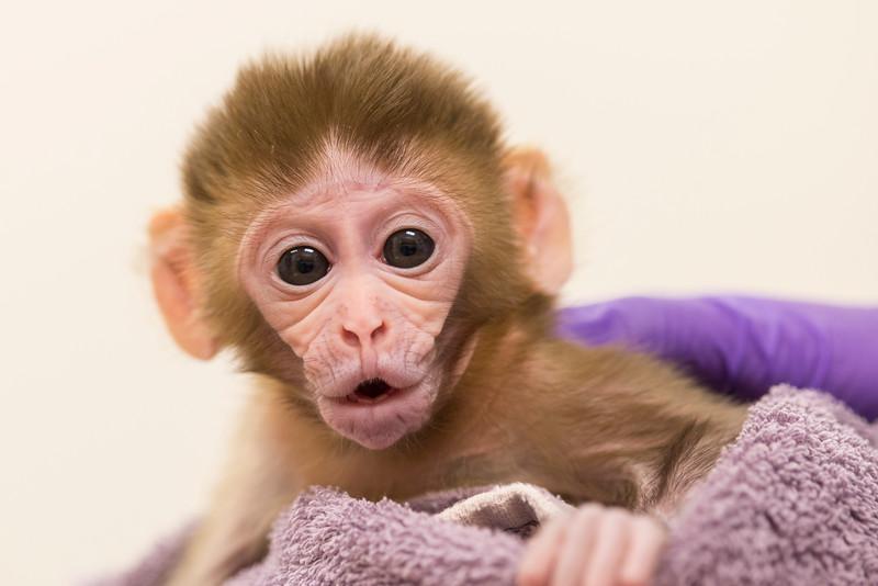 Baby Monkey - Mia