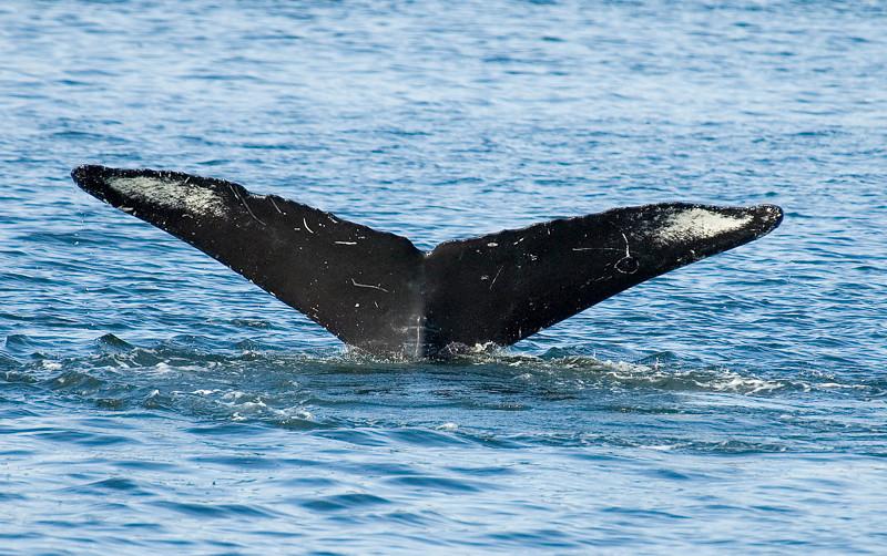 AK_Whales-18.jpg