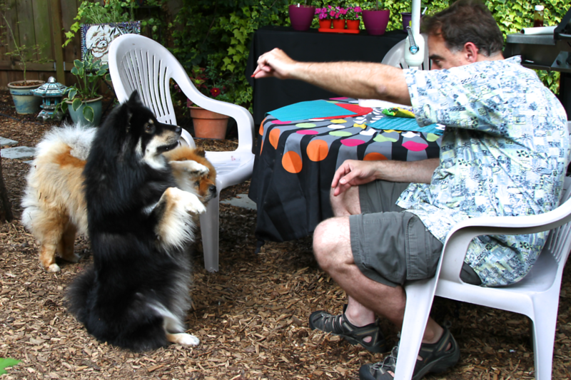 Steve teaching Onni how to beg properly at the picnic table.  Lillian was helping July 1 2013