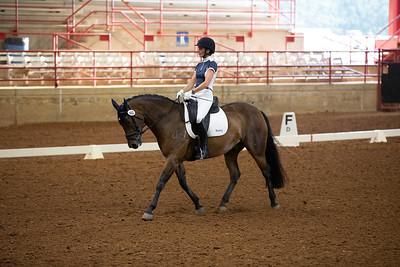 Horse 460