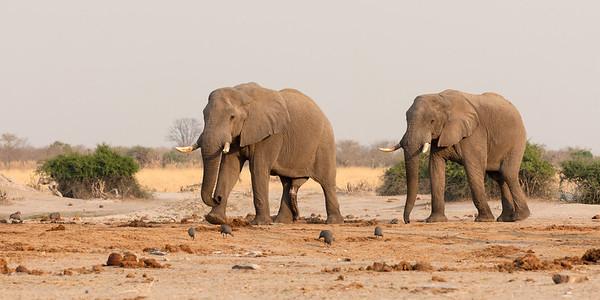 Safari Namibië en Botswana