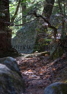 Yosemite050
