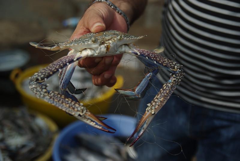 Targ rybny