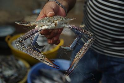 20100609 Bandar Abbas + Sea food rulez!