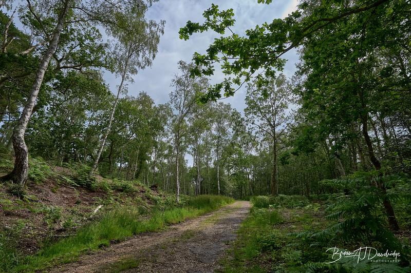 Burton Mill Pond-1941 - 9-54 am.jpg