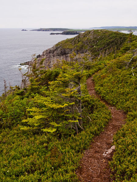 Looking south to Ferryland