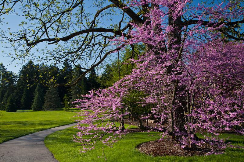Spring13-0145.jpg