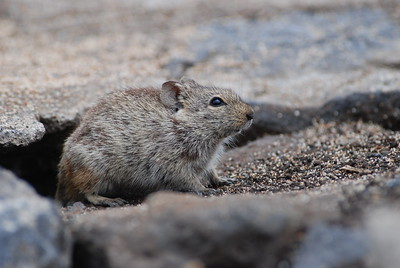 Rodents and Hares - Nagetiere und Hasen