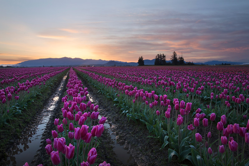 sunrise in pink.jpg