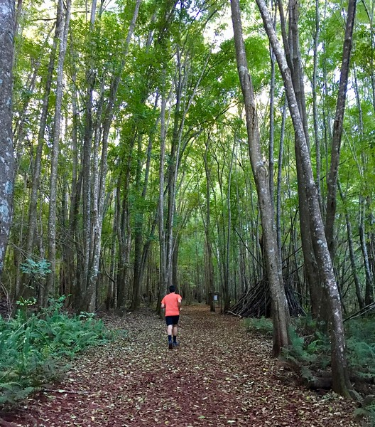 Makawao Forest Reserve Run