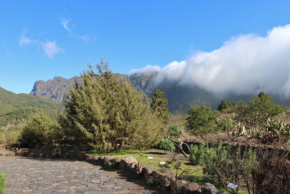 La Palma, garden at visitor centre
