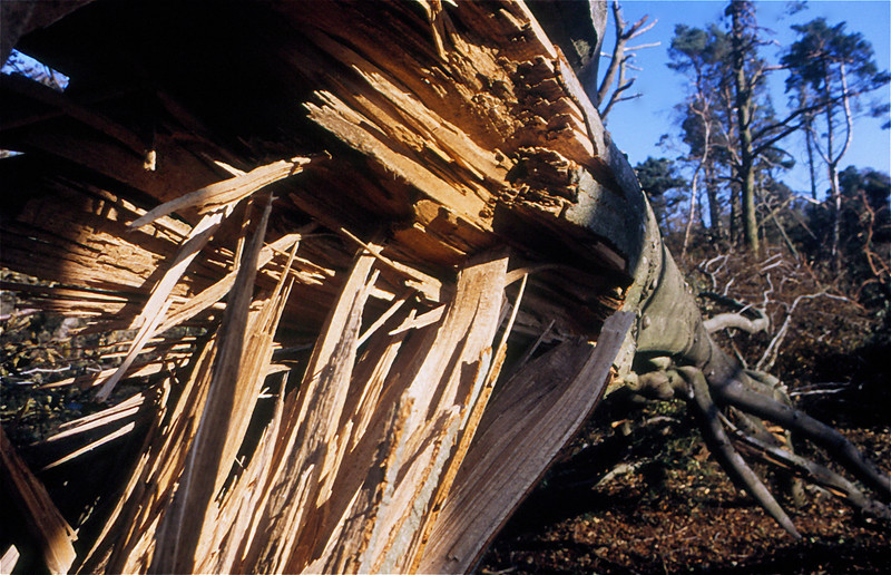 1411 After the  Hurricane Leith Hill Surrey Oct 1987.jpg