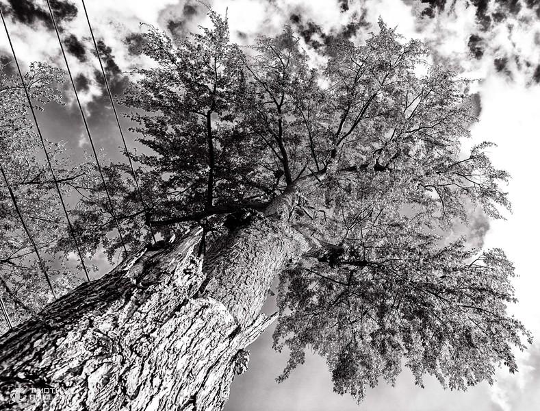 untitled-161-Edit.JPG