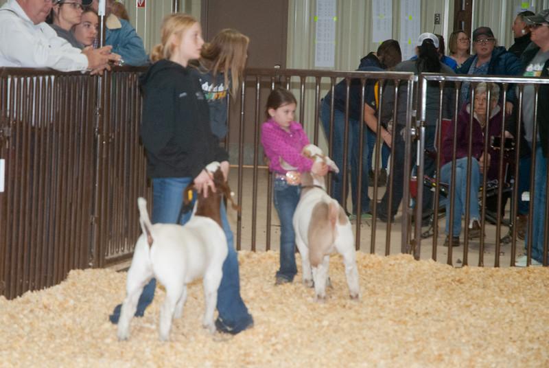 kay_county_showdown_goats_20191207-76.jpg
