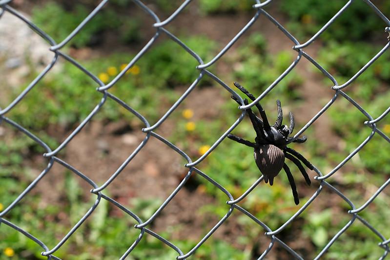 7014 Spider on Fence.jpg