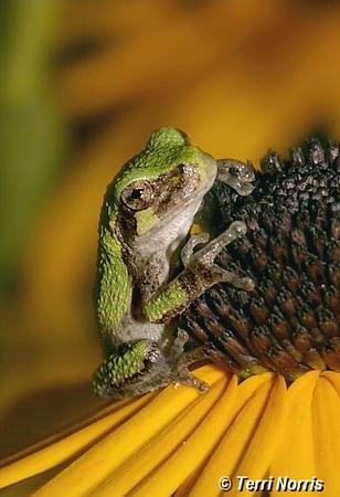 tree_frog_2_npn_1058.jpg