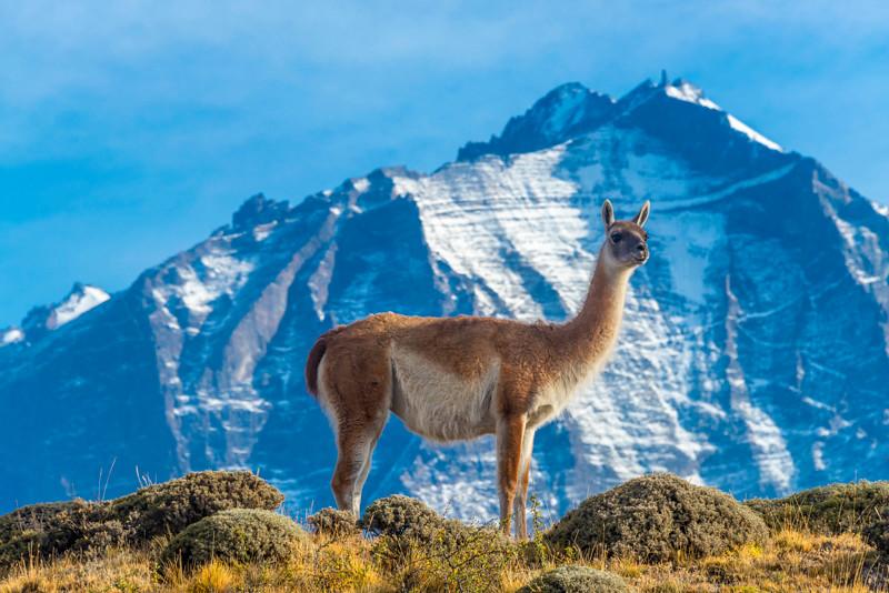Torres del Paine (55).jpg