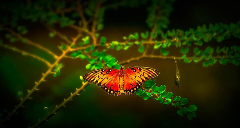 Butterfly-211.jpg
