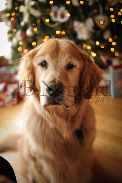 12-29-17 Tom and Marlyn Edward's dog - Max-2.jpg