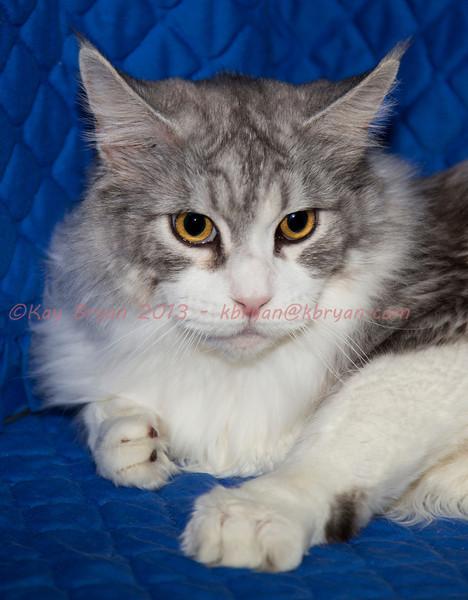 CatShow2014030.JPG