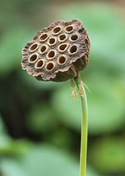 Lily Flower.jpg