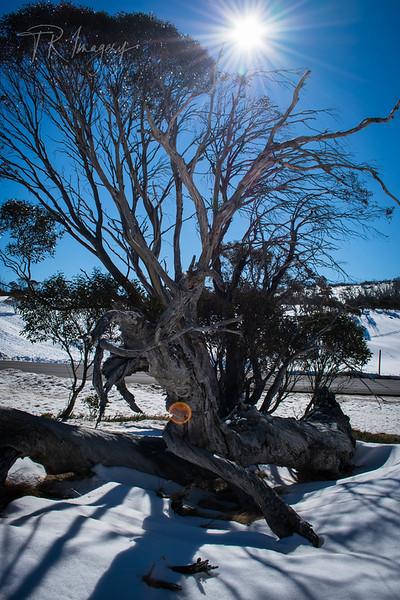 Snow -0191.jpg