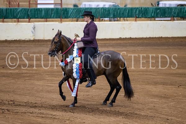 125 Fino Amateur Geldings Championship