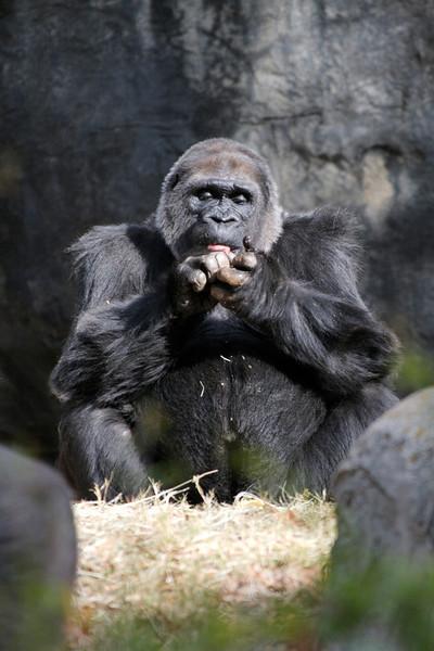 Atl Zoo_IMG_1746