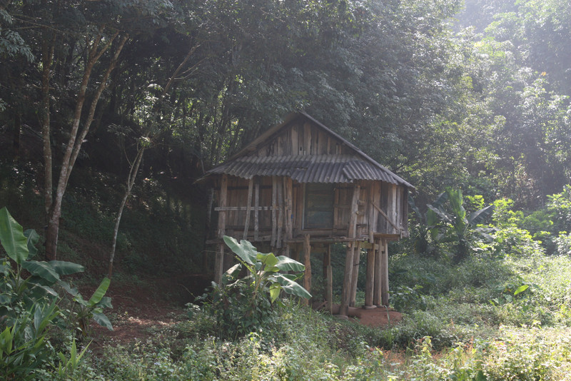 a shelter in the jungle