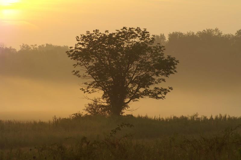 tuslaw tree 3.JPG